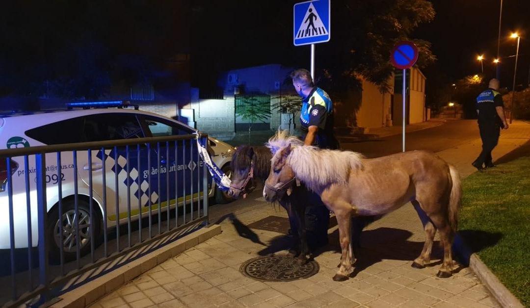 🔊 Localitzen dos ponis que circulaven lliurement pels carrers de Reus