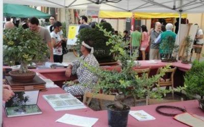 🔊 Reus acull aquest dissabte l'11a fira de cultura japonesa Hikari