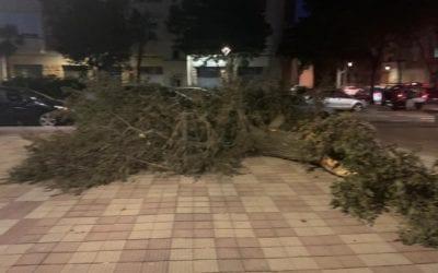 🔊 El Baix Camp ha estat la comarca més afectada per les ratxes de fort vent d'aquest diumenge